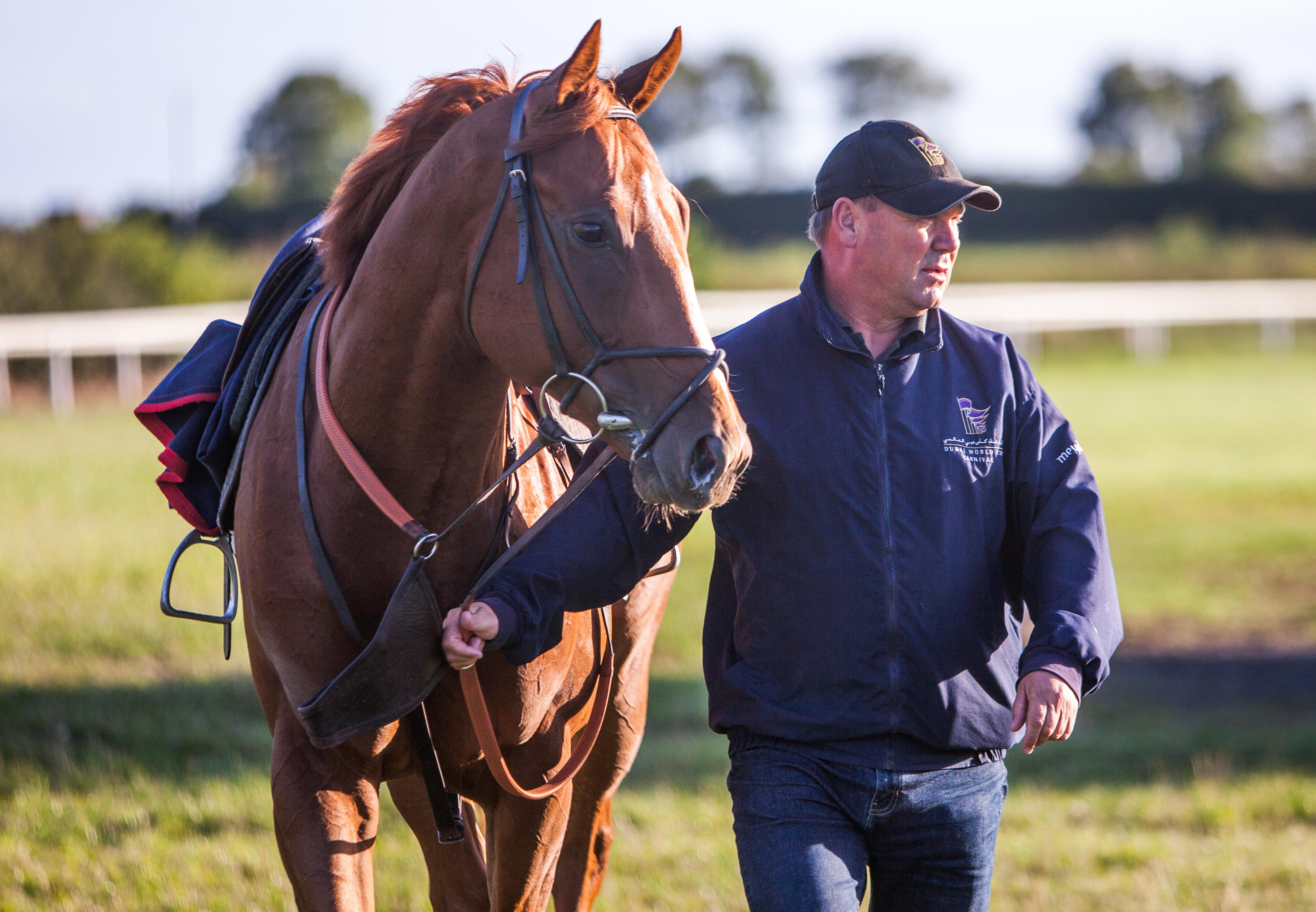 Image result for michael halford racehorse trainer