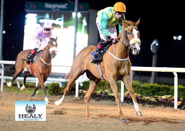 Eric Koh's  KIRK'S DANCER and Pat Smullen winning the Christmas Party Nights At Dundalk Stadium Maiden at Dundalk 22.12.17.